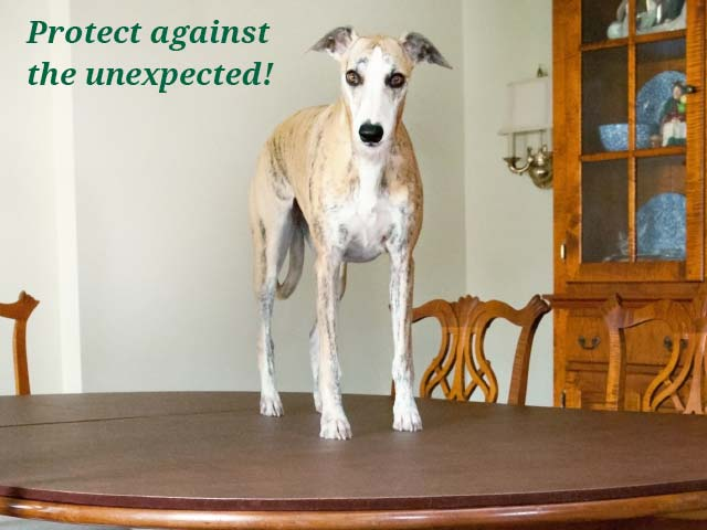 Photo: dog on dining room table pad